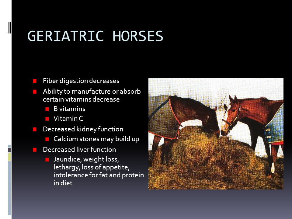 GERIATRIC HORSES Fiber digestion decreases