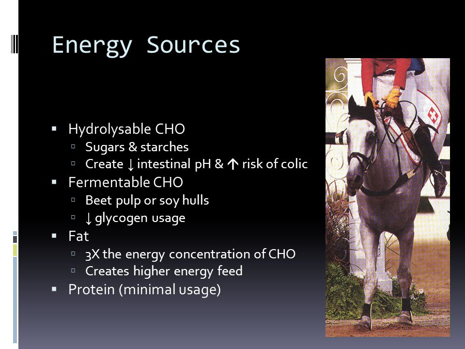 Energy Sources Hydrolysable CHO Fermentable CHO Fat