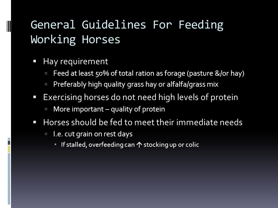 General Guidelines For Feeding Working Horses
