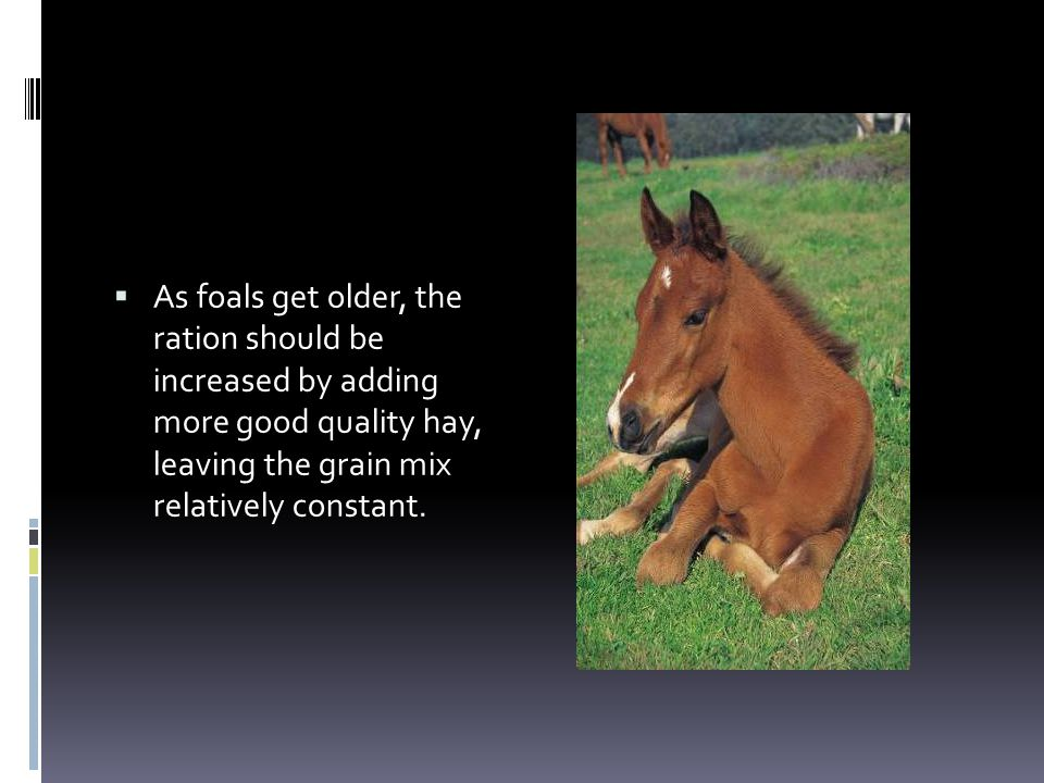 As foals get older, the ration should be increased by adding more good quality hay, leaving the grain mix relatively constant.