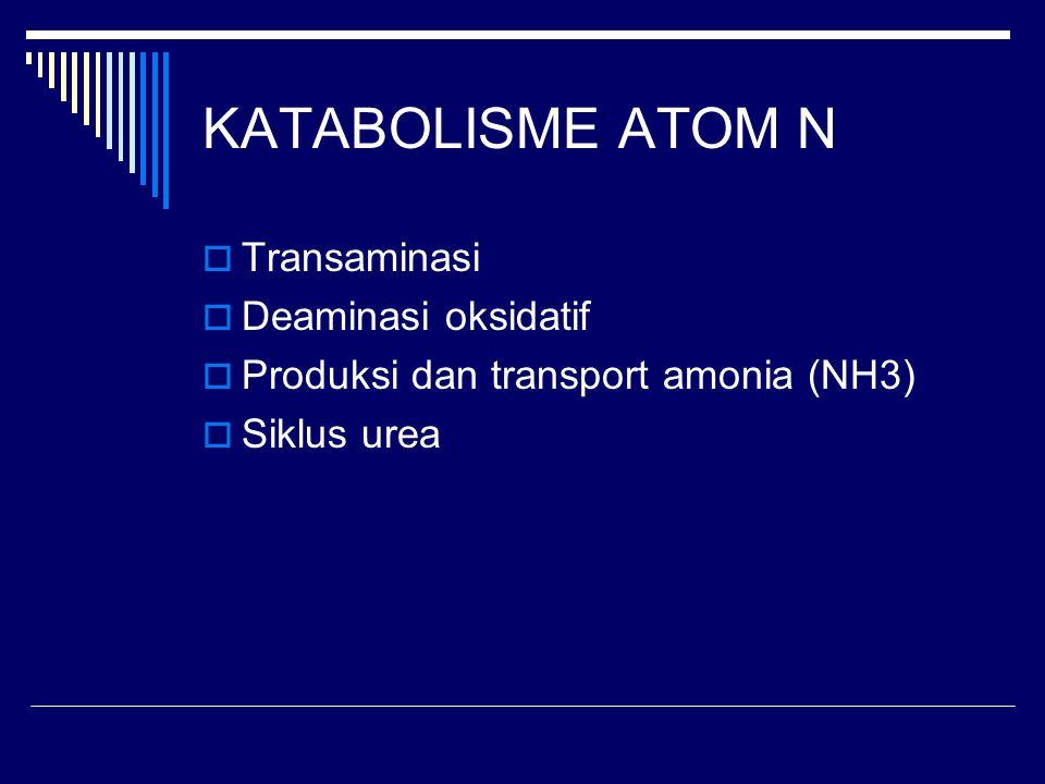 KATABOLISME ATOM N Transaminasi Deaminasi oksidatif