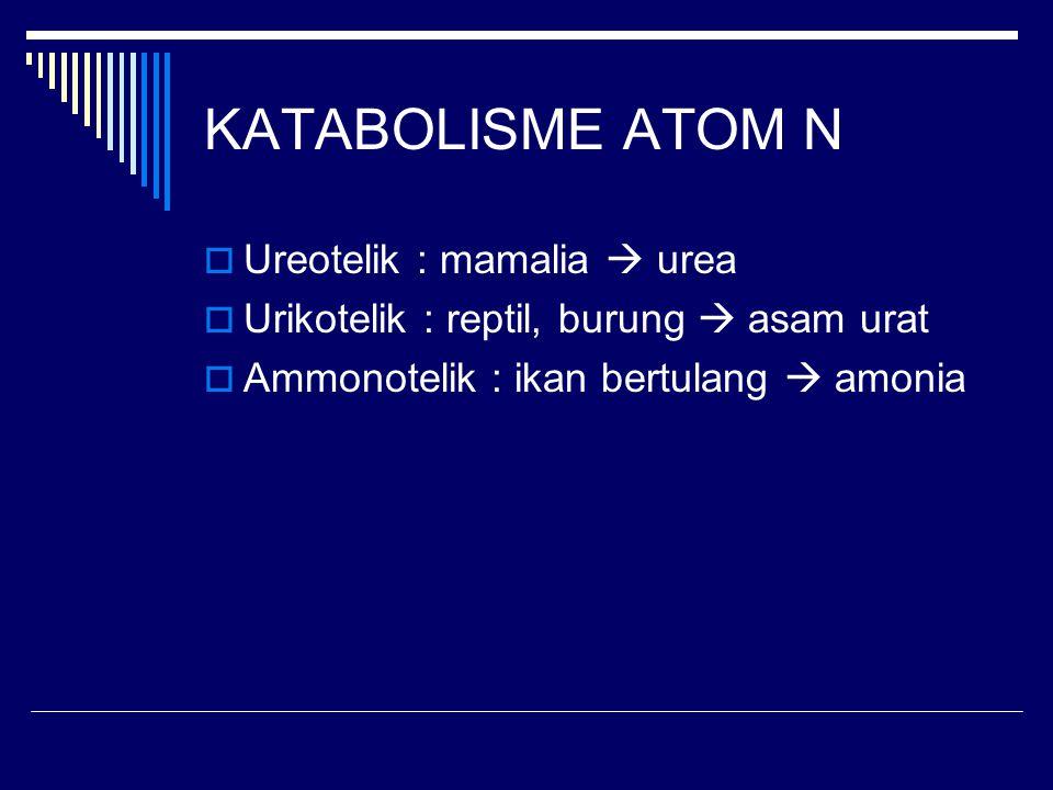 KATABOLISME ATOM N Ureotelik : mamalia  urea