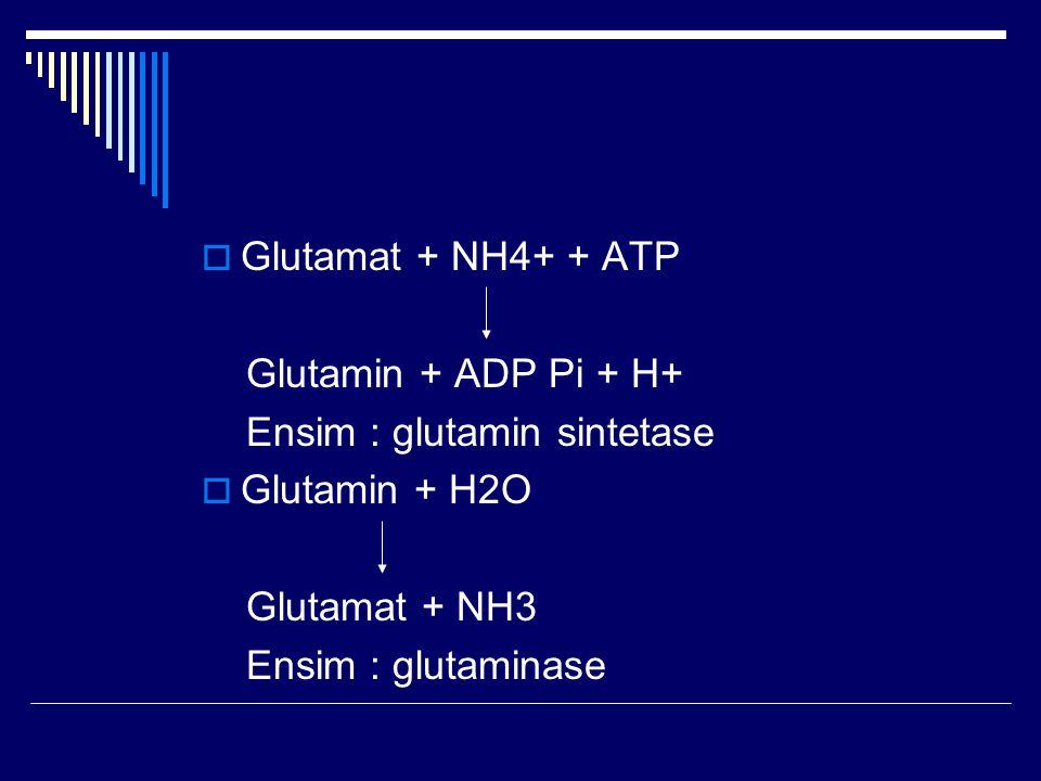 Glutamat + NH4+ + ATP Glutamin + ADP Pi + H+ Ensim : glutamin sintetase. Glutamin + H2O. Glutamat + NH3.