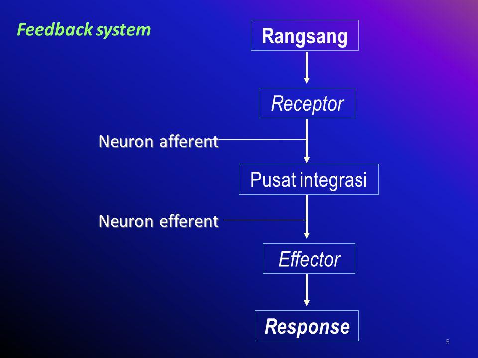 Rangsang Receptor Pusat integrasi Effector Response Feedback system