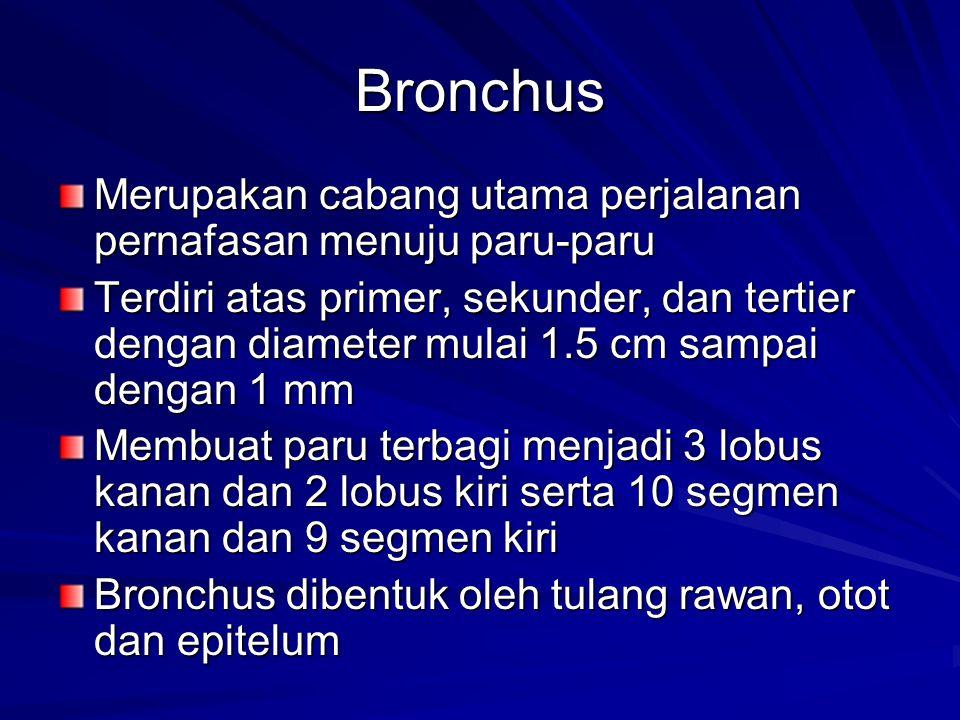 Bronchus Merupakan cabang utama perjalanan pernafasan menuju paru-paru
