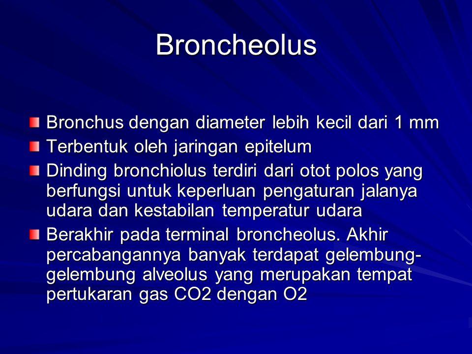 Broncheolus Bronchus dengan diameter lebih kecil dari 1 mm
