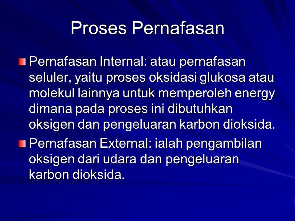 Proses Pernafasan