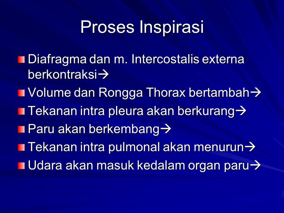 Proses Inspirasi Diafragma dan m. Intercostalis externa berkontraksi
