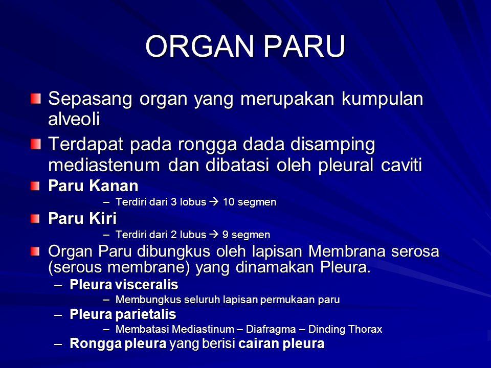 ORGAN PARU Sepasang organ yang merupakan kumpulan alveoli