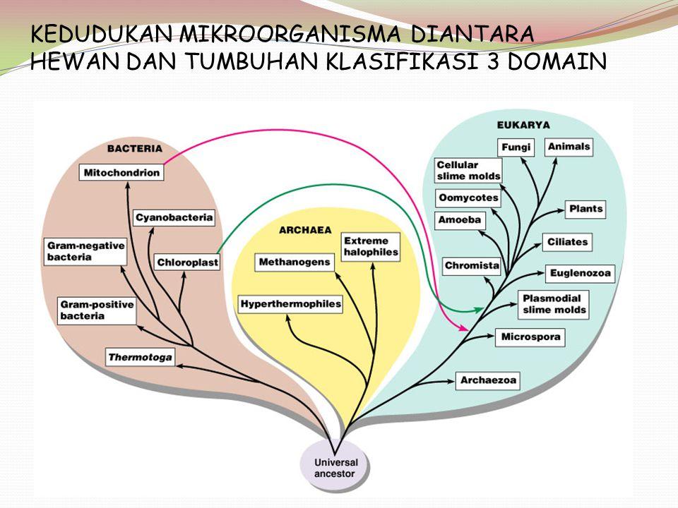 KEDUDUKAN MIKROORGANISMA DIANTARA HEWAN DAN TUMBUHAN KLASIFIKASI 3 DOMAIN