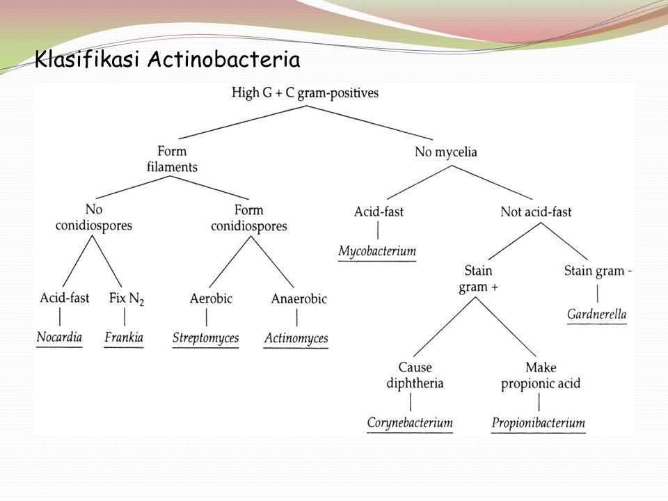 Klasifikasi Actinobacteria