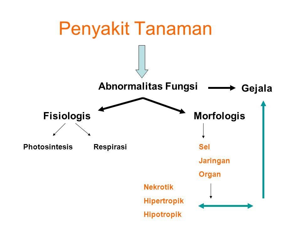 Penyakit Tanaman Abnormalitas Fungsi Gejala Fisiologis Morfologis