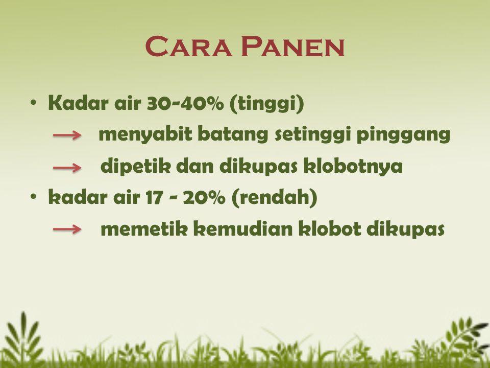 Cara Panen Kadar air 30-40% (tinggi) menyabit batang setinggi pinggang