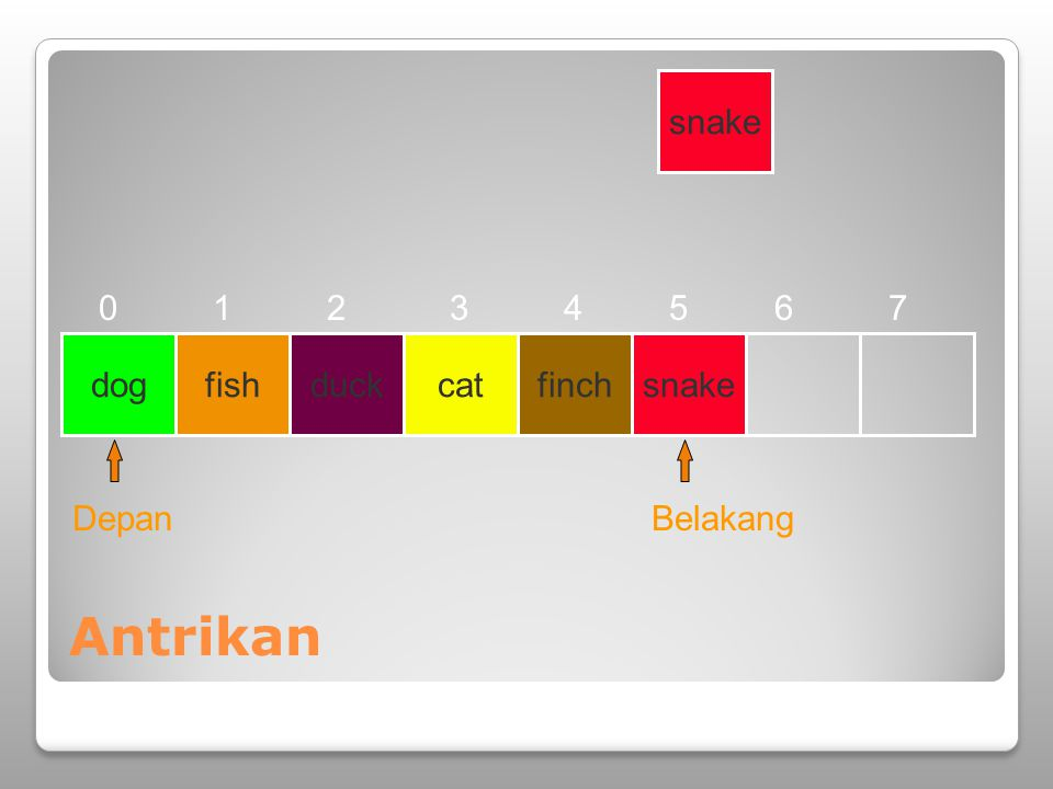 Antrikan snake 1 2 3 4 5 6 7 dog fish duck cat finch snake Depan