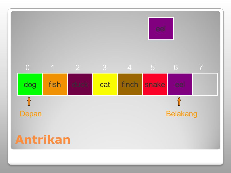 Antrikan eel 1 2 3 4 5 6 7 dog fish duck cat finch snake eel Depan