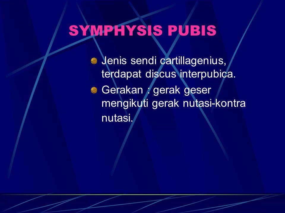SYMPHYSIS PUBIS Jenis sendi cartillagenius, terdapat discus interpubica.