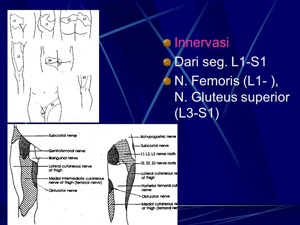 Innervasi Dari seg. L1-S1 N. Femoris (L1- ), N. Gluteus superior (L3-S1)