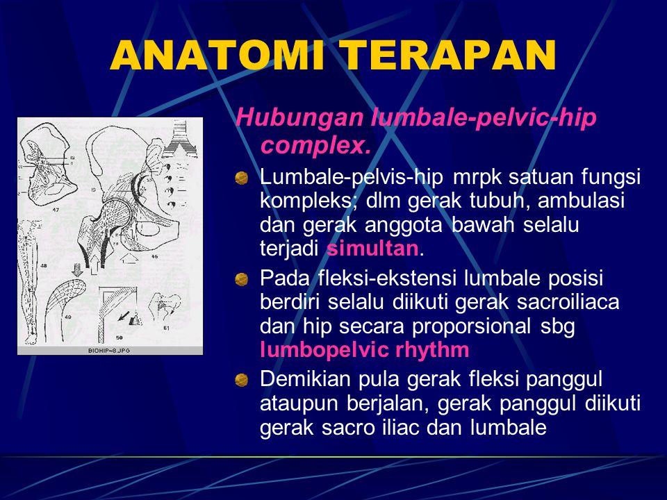 ANATOMI TERAPAN Hubungan lumbale-pelvic-hip complex.