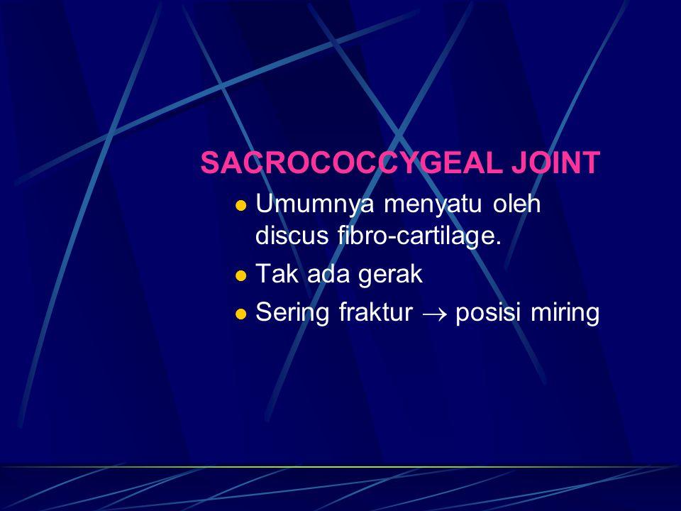 SACROCOCCYGEAL JOINT Umumnya menyatu oleh discus fibro-cartilage.