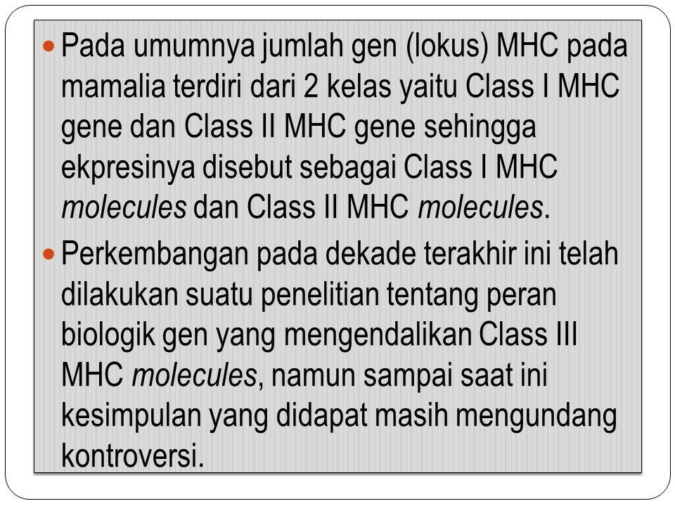 Pada umumnya jumlah gen (lokus) MHC pada mamalia terdiri dari 2 kelas yaitu Class I MHC gene dan Class II MHC gene sehingga ekpresinya disebut sebagai Class I MHC molecules dan Class II MHC molecules.