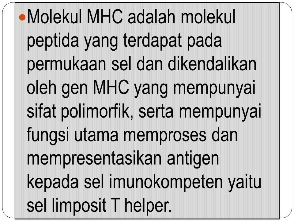 Molekul MHC adalah molekul peptida yang terdapat pada permukaan sel dan dikendalikan oleh gen MHC yang mempunyai sifat polimorfik, serta mempunyai fungsi utama memproses dan mempresentasikan antigen kepada sel imunokompeten yaitu sel limposit T helper.