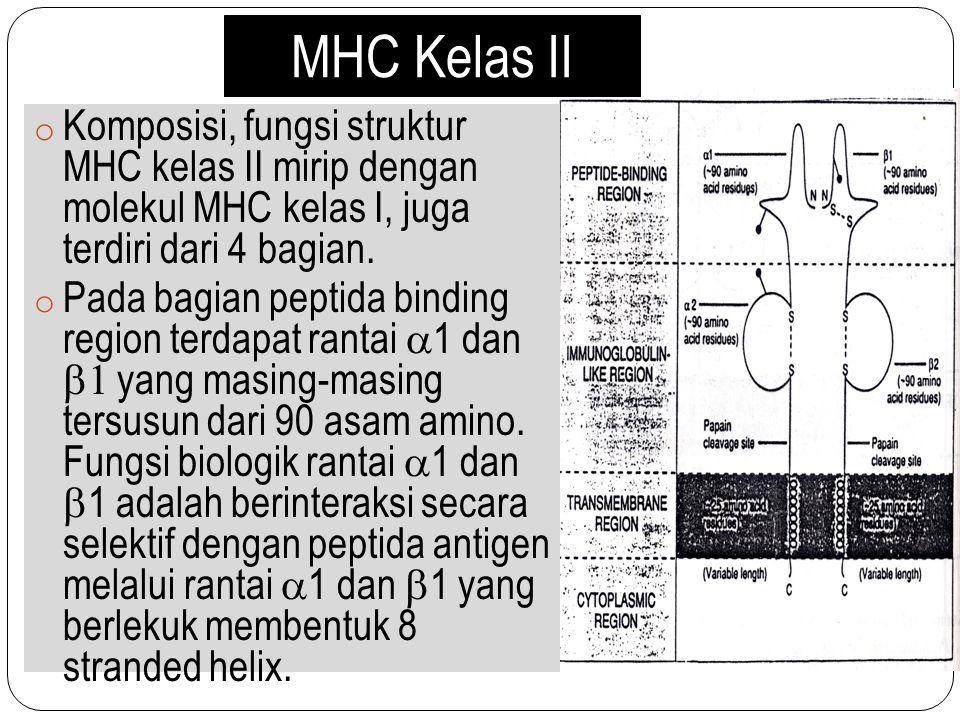 MHC Kelas II Komposisi, fungsi struktur MHC kelas II mirip dengan molekul MHC kelas I, juga terdiri dari 4 bagian.