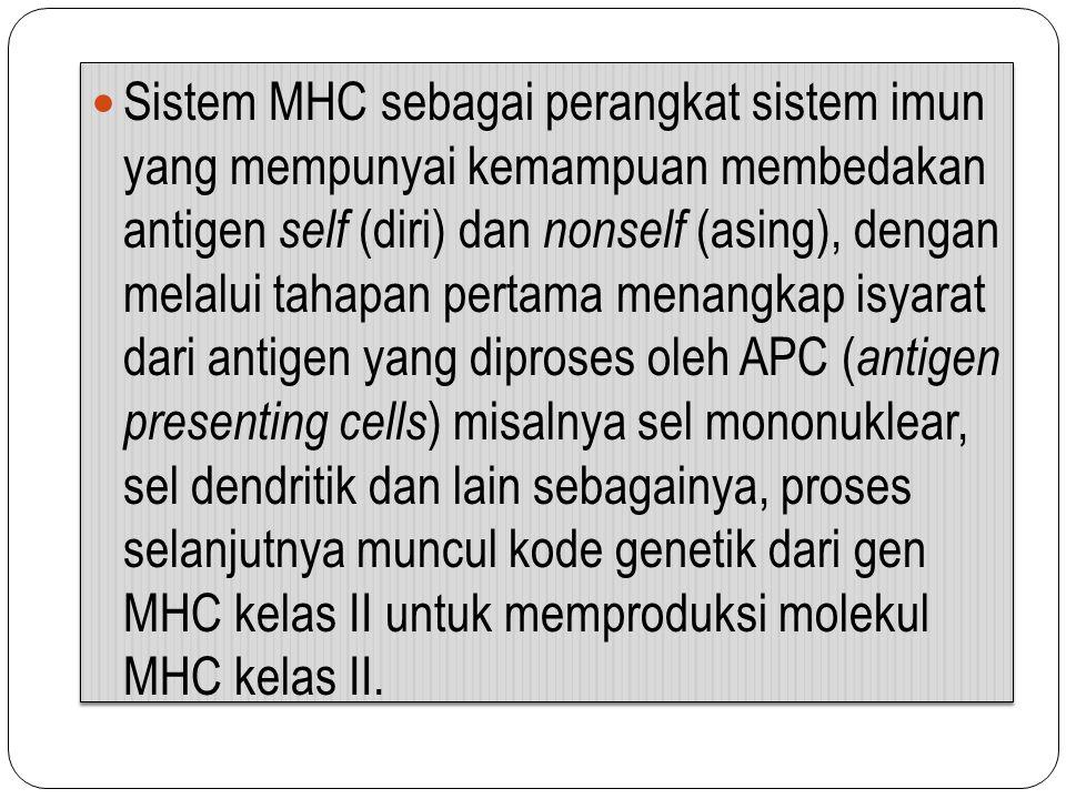 Sistem MHC sebagai perangkat sistem imun yang mempunyai kemampuan membedakan antigen self (diri) dan nonself (asing), dengan melalui tahapan pertama menangkap isyarat dari antigen yang diproses oleh APC (antigen presenting cells) misalnya sel mononuklear, sel dendritik dan lain sebagainya, proses selanjutnya muncul kode genetik dari gen MHC kelas II untuk memproduksi molekul MHC kelas II.