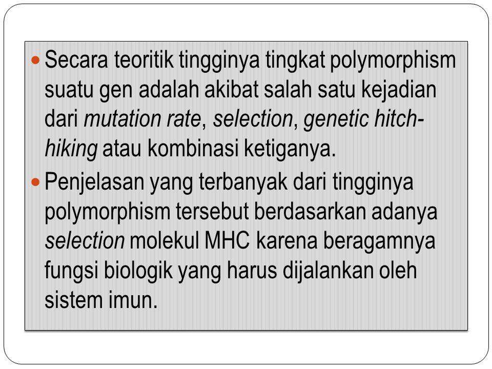 Secara teoritik tingginya tingkat polymorphism suatu gen adalah akibat salah satu kejadian dari mutation rate, selection, genetic hitch- hiking atau kombinasi ketiganya.
