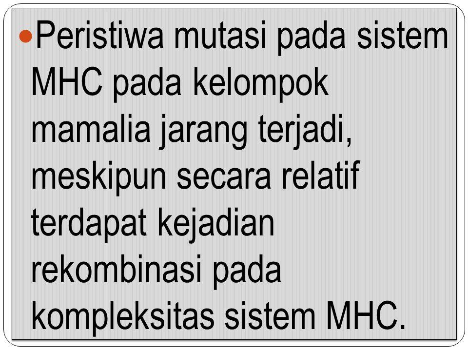 Peristiwa mutasi pada sistem MHC pada kelompok mamalia jarang terjadi, meskipun secara relatif terdapat kejadian rekombinasi pada kompleksitas sistem MHC.