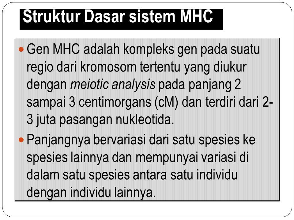 Struktur Dasar sistem MHC