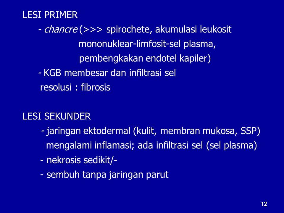 LESI PRIMER - chancre (>>> spirochete, akumulasi leukosit. mononuklear-limfosit-sel plasma, pembengkakan endotel kapiler)