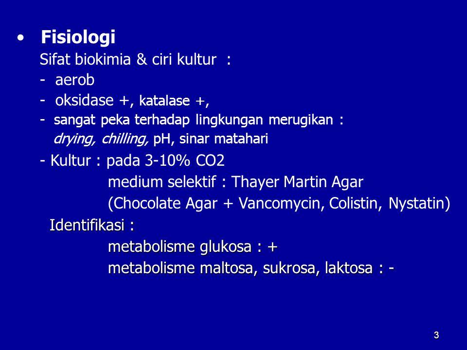 Fisiologi Sifat biokimia & ciri kultur : - aerob