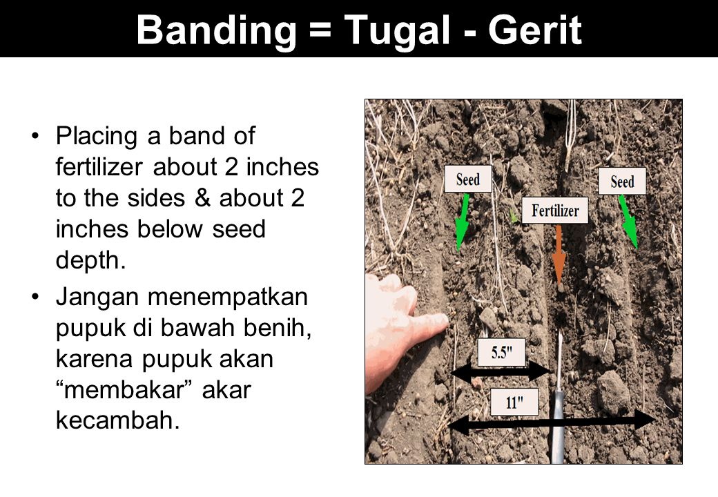 Banding = Tugal - Gerit Placing a band of fertilizer about 2 inches to the sides & about 2 inches below seed depth.