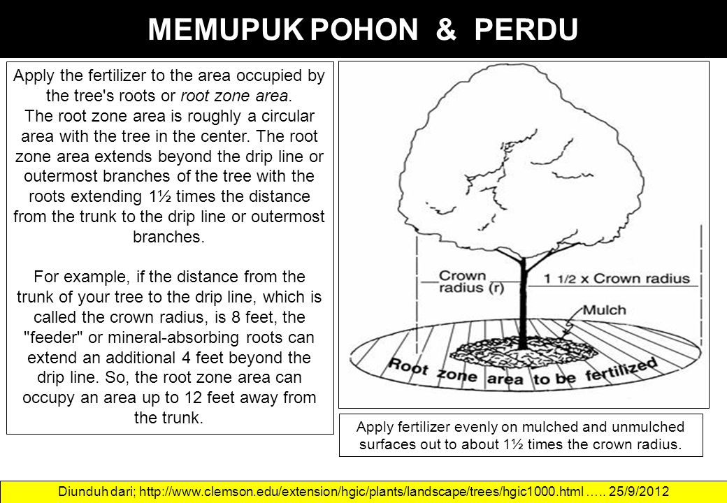 MEMUPUK POHON & PERDU Apply the fertilizer to the area occupied by the tree s roots or root zone area.