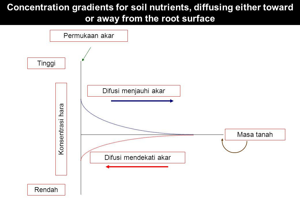 Concentration gradients for soil nutrients, diffusing either toward or away from the root surface
