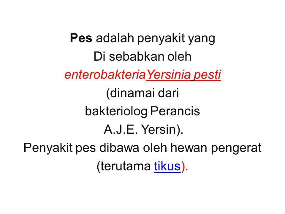 Pes adalah penyakit yang Di sebabkan oleh enterobakteriaYersinia pesti