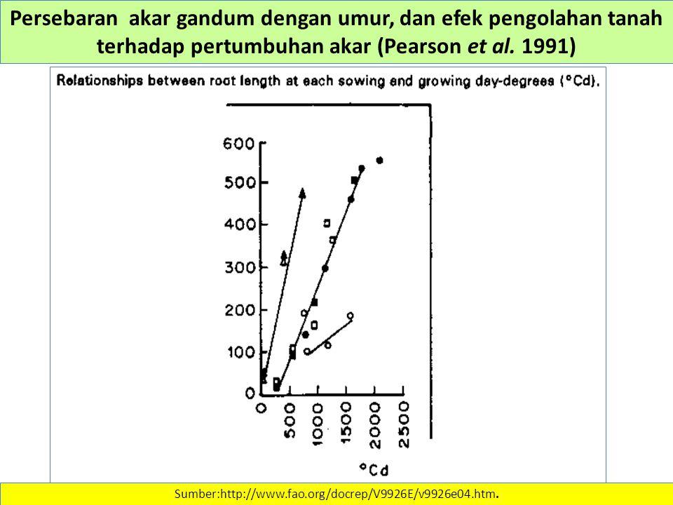 Persebaran akar gandum dengan umur, dan efek pengolahan tanah terhadap pertumbuhan akar (Pearson et al. 1991)
