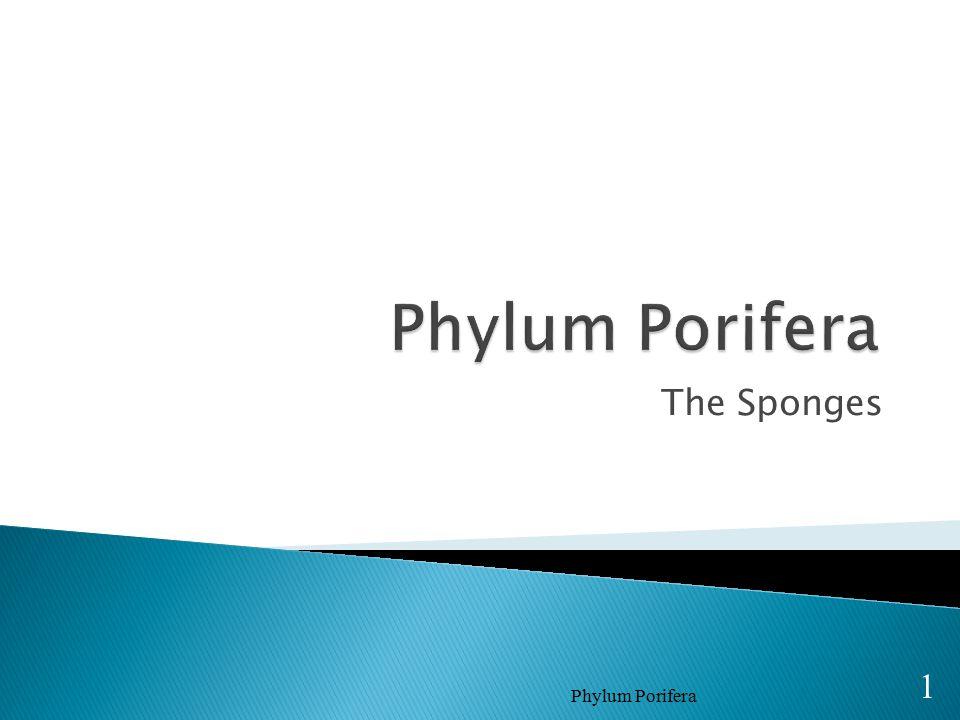 Phylum Porifera The Sponges Phylum Porifera