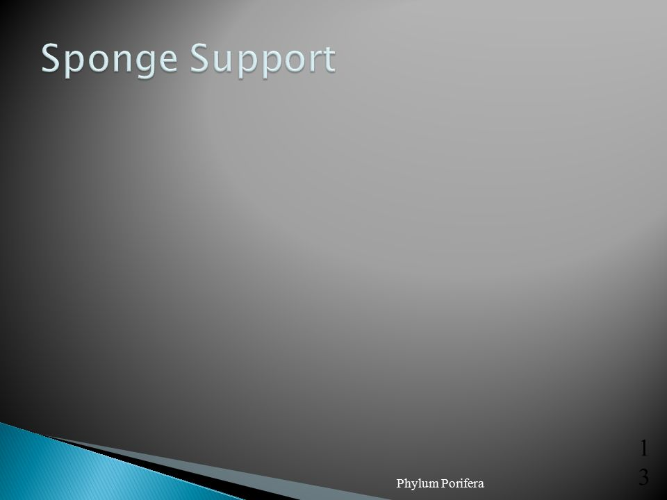 Sponge Support Phylum Porifera
