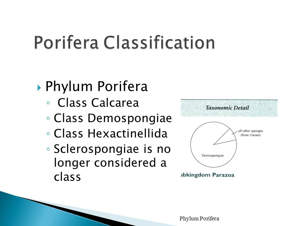 Porifera Classification