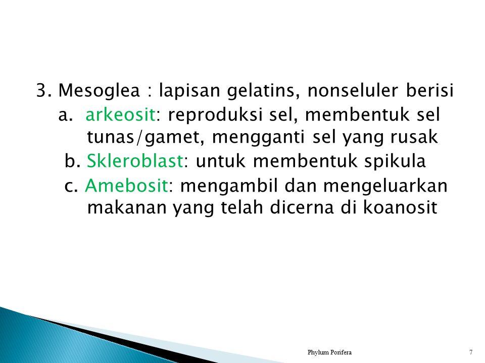 3. Mesoglea : lapisan gelatins, nonseluler berisi