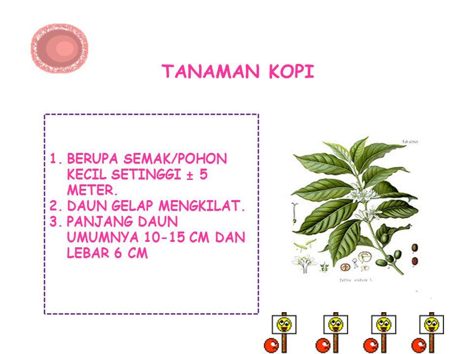 TANAMAN KOPI BERUPA SEMAK/POHON KECIL SETINGGI ± 5 METER.