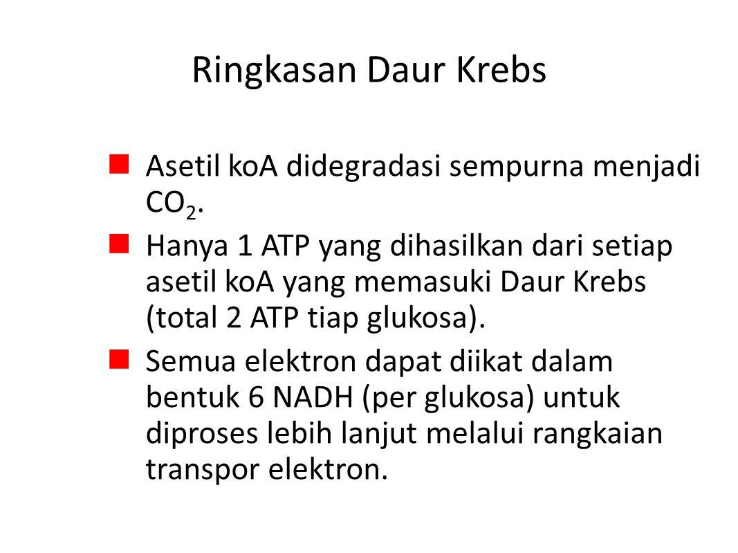 Ringkasan Daur Krebs Asetil koA didegradasi sempurna menjadi CO2.