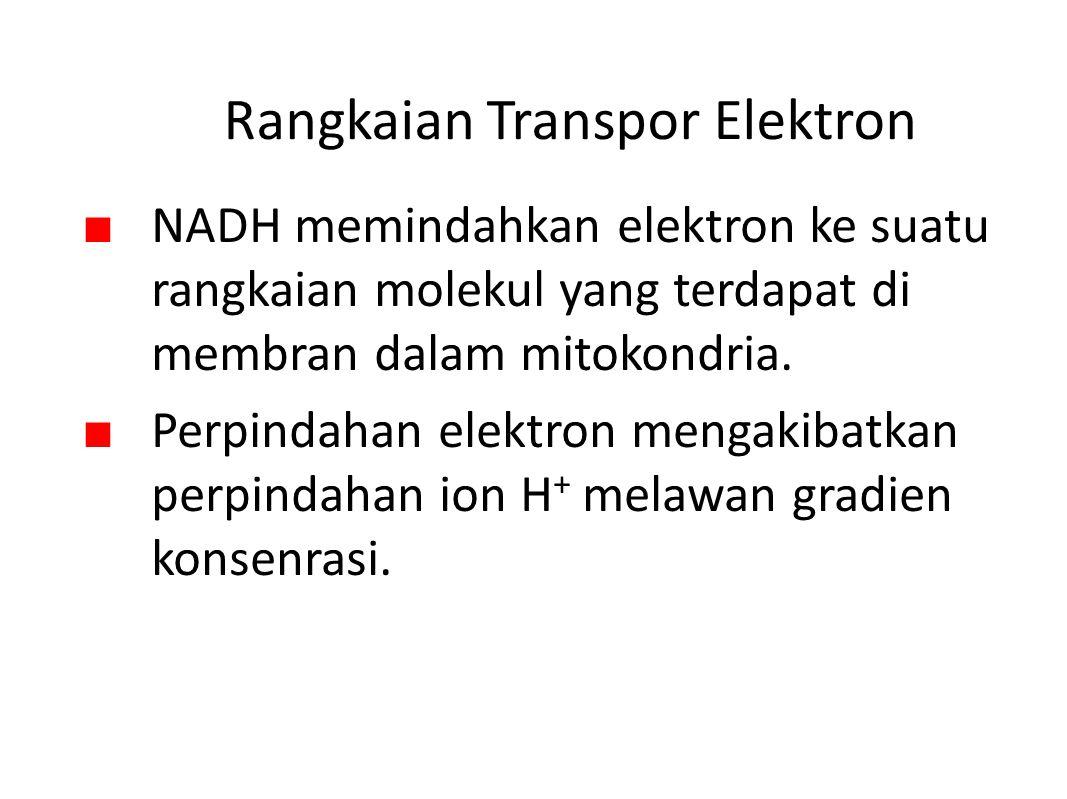 Rangkaian Transpor Elektron