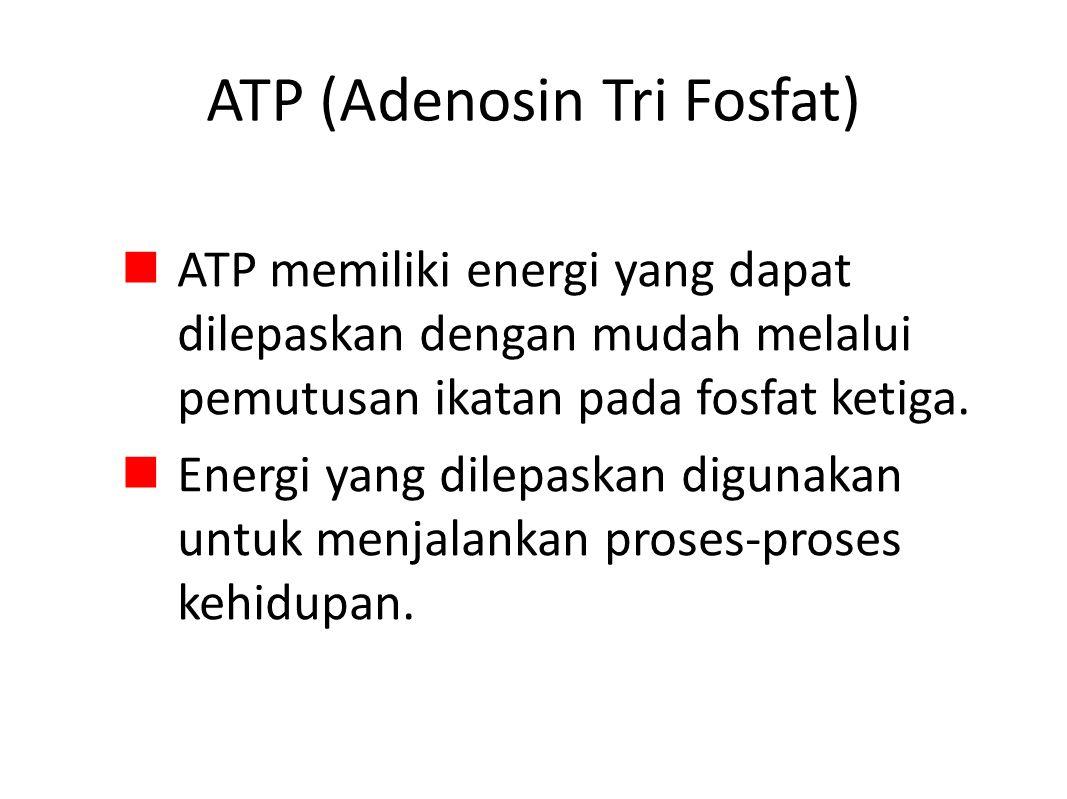 ATP (Adenosin Tri Fosfat)