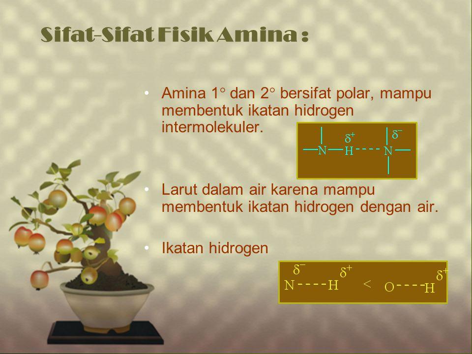 Sifat-Sifat Fisik Amina :