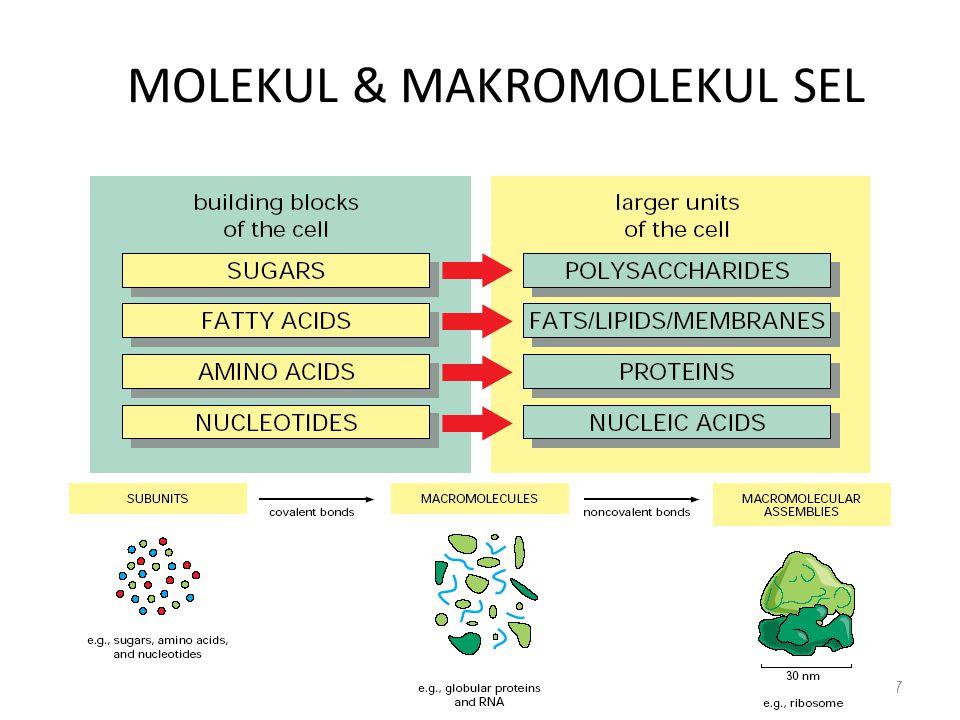 MOLEKUL & MAKROMOLEKUL SEL