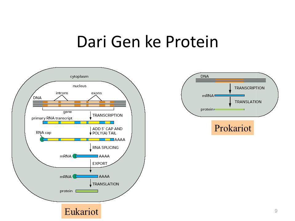 Dari Gen ke Protein Prokariot Eukariot