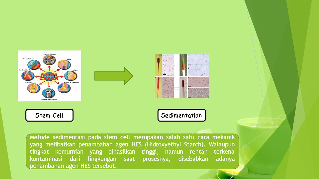 Stem Cell Sedimentation.