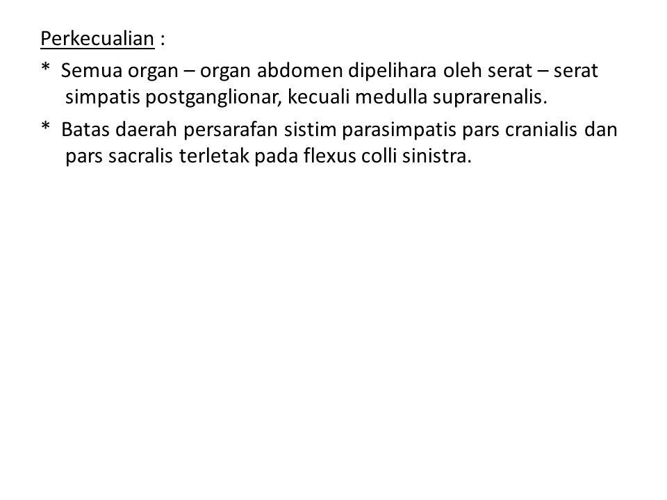 Perkecualian : * Semua organ – organ abdomen dipelihara oleh serat – serat simpatis postganglionar, kecuali medulla suprarenalis.